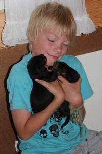 Luka ja 9 vrk:tta vanhat rottweiler-vauvat.